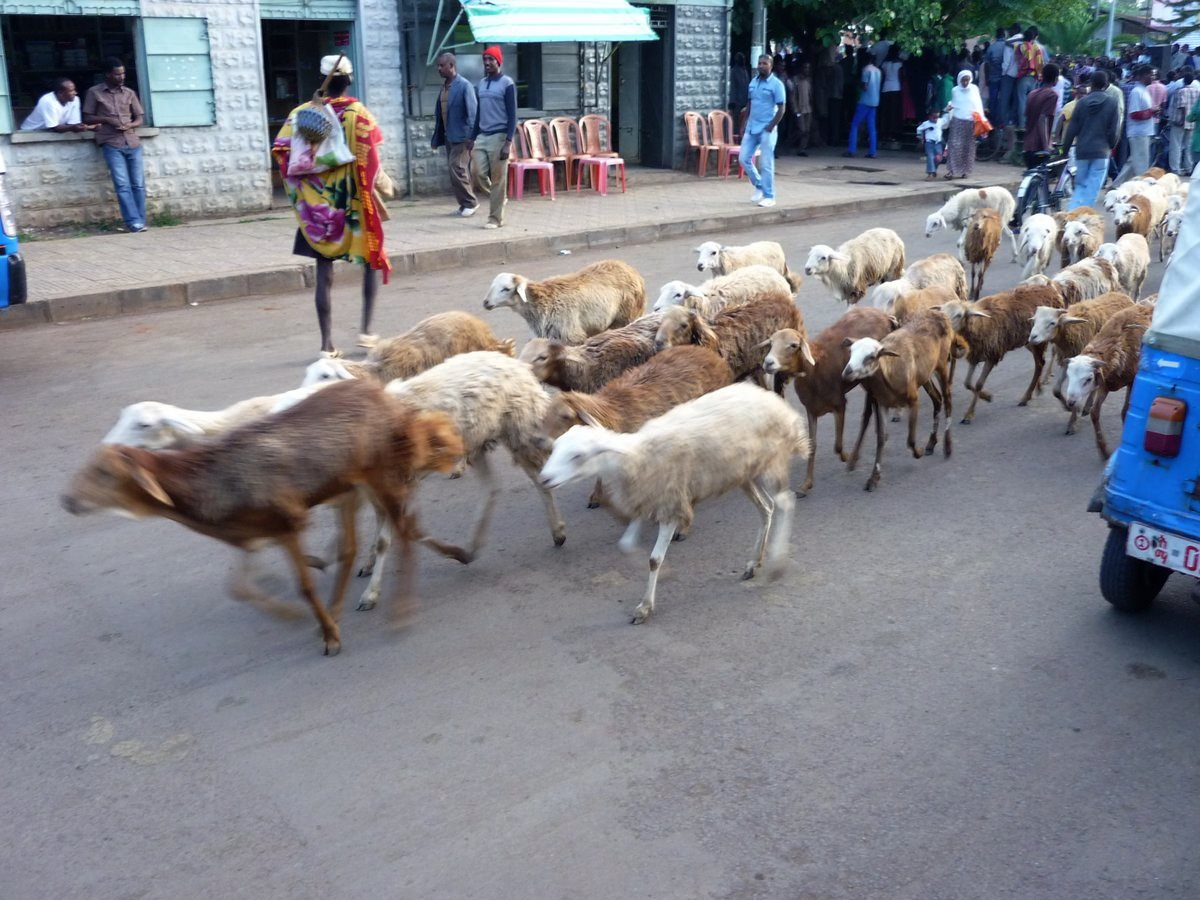 Ethiopie-Nord-05
