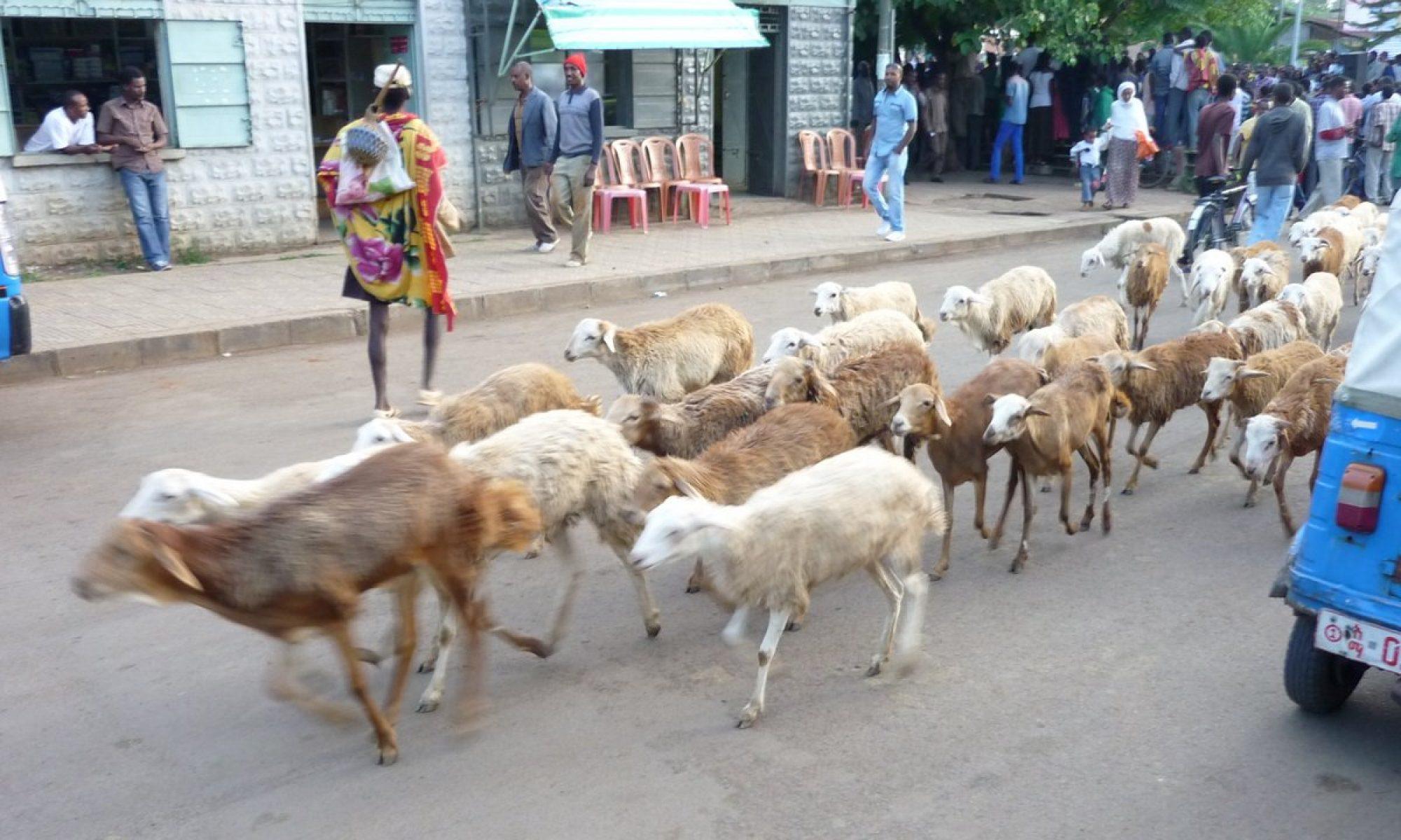 Sur les routes d'Ethiopie